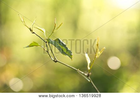Morning young sprig with leaves and sunlight Beautiful spring background