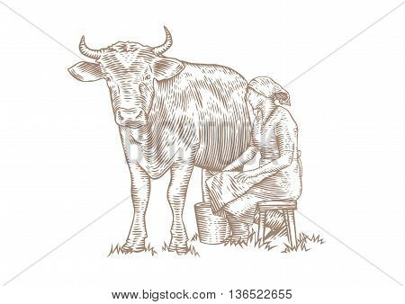 Drawing of a seated milkmaid who milks the cow