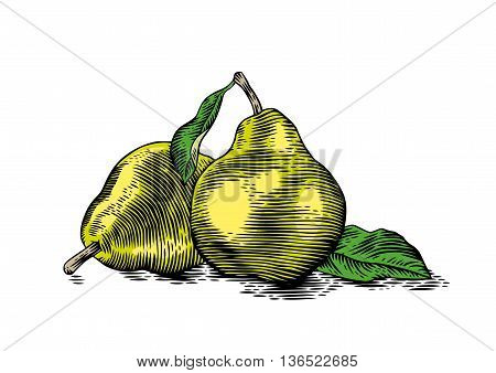 Drawing of two fresh pears with a green leaves