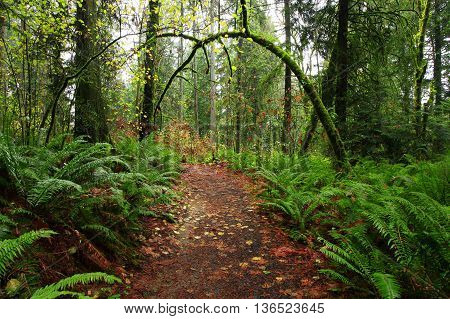 a picture of an exterior Pacific Northwest forest hiking trail