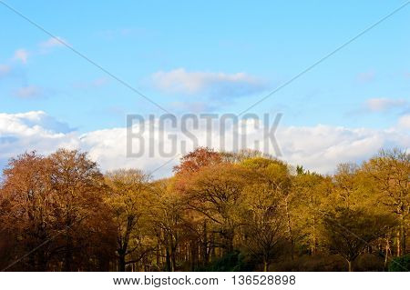 Pretty colors of autumn woodland with assorted deciduous trees with their red yellow and orange leaves against a sunny blue sky with clouds