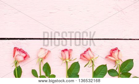 Bright roses on pink wood background with space for text