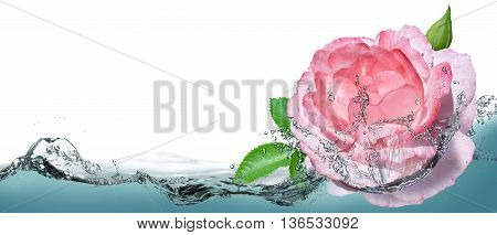 Beautiful rose in a spray of clear water.
