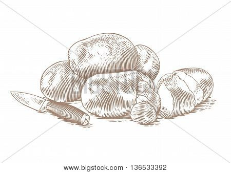 Drawing of potatoes handful with peels and kitchen knife