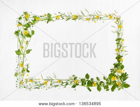 Beautiful frame of meadow flower on white background