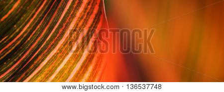 Colorful Leaf Abstract Blur Close Up Background