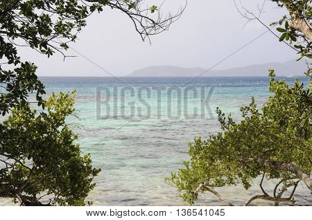 A view between trees of the ocean from St. John island.