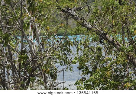 The shoreline from behind the brush showing blue water on St. John island in the Caribbean.