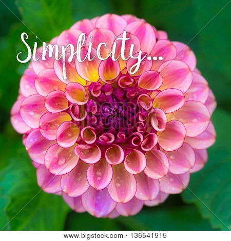 The concept of simplicity.