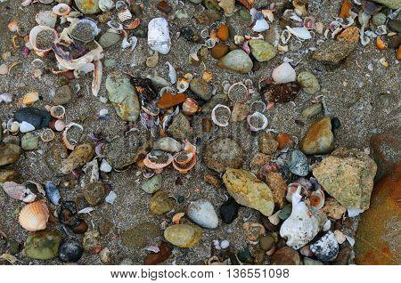 Broken seashells and small rocks on beach