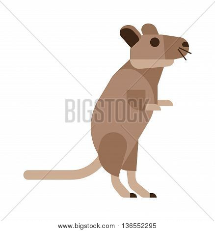 Rat mouse isolated on white. Wild rodent animal mouse rat vector character. Cute little rat or mouse fur tail domestic paw. Funny fluffy cartoon nature animal character icon. Rodent animal mammal.