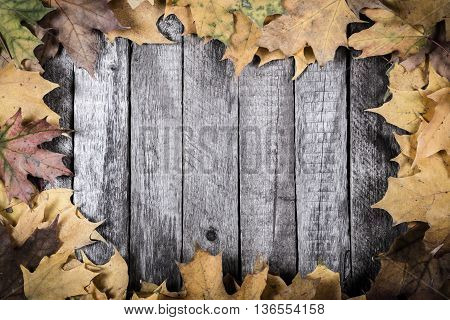 Grunge wooden natural background with yellow maple leaves and space for text