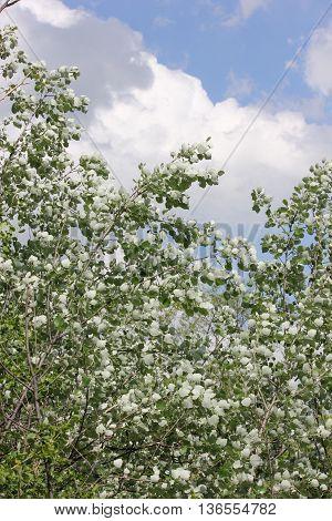 Spring at Poplar Creek Forest Preserve in Hoffman Estates, Illinois