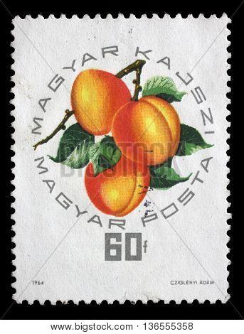 ZAGREB, CROATIA - JULY 03: A stamp printed in Hungary, shows Hungarian apricot, circa 1964, on July 03, 2014, Zagreb, Croatia