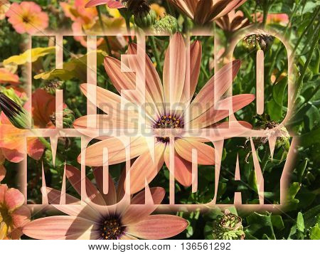 Hello Monday word on nature flowers background