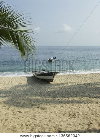 A boat on the beach with the ocean a palm tree.