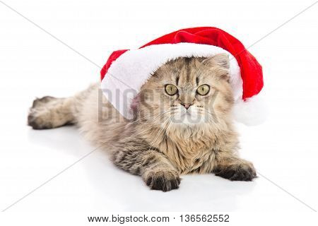 Kitten in Santa Claus xmas red hat on white background isolated