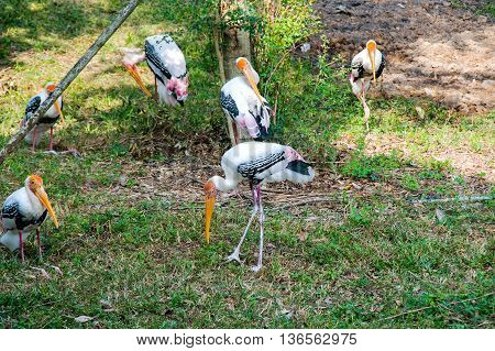 The storks gather together under tree for relaxing.
