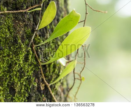 Green fern leaves in spring on a sunny day