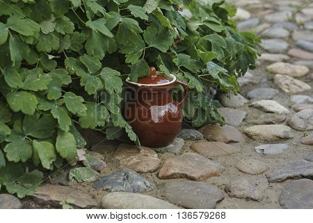 brown old jug near green flower and stones in garden close up