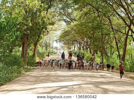 NORTH KENYA - JAN 05: Shepherd leading a flock of goats on January 5 2013 in North Kenya