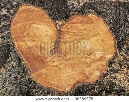 texture of alder wood shaped face and heart
