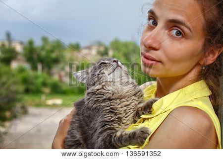 The cat sits on hands at the mistress. Best friend. Hugs . Pet.