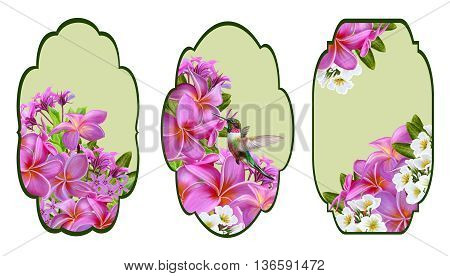Set labels. Card invitation business card. Flower pattern pink plumeria tropical exotic flower a small bird of the hummingbird.
