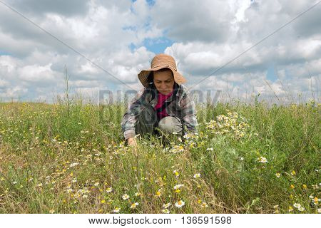 Woman in straw hat and plaid shirt collects medicinal herbs with enthusiasm