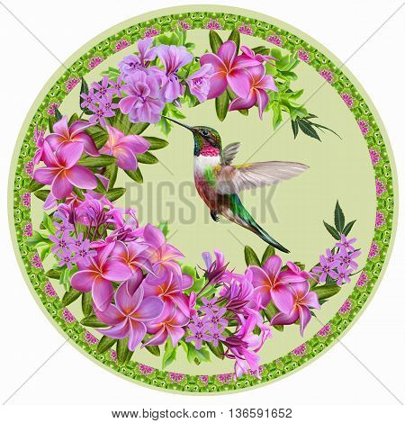 pink plumeria tropical exotic flower a small bird of the hummingbird. Round form circle painting. Flower pattern.