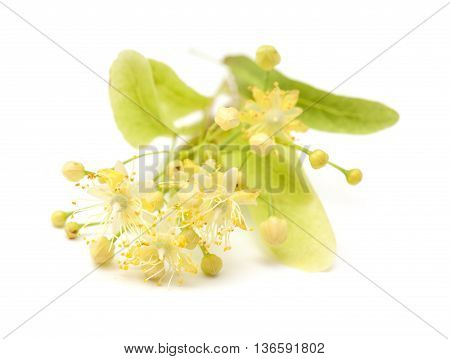 Lime Blossom Isolated