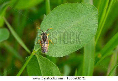Spring time in the fields - green flora and beautiful fauna