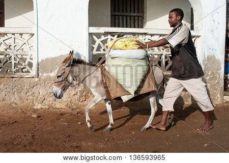 Locals Using A Donkey For Transport In Lamu, Kenya