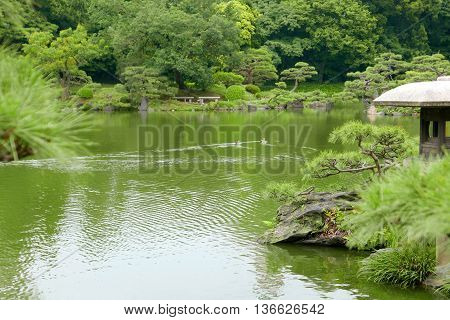 Pine Trees, Stone Lantern And Ducks In Zen Garden