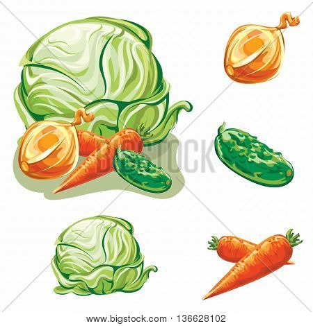 vector illustration of vegetables, cabbage, carrots, onions, cucumber and composition as the selected objects