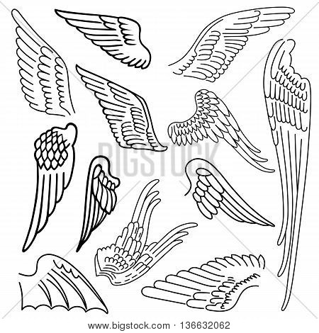 Birds & wings set linear silhouette isolated on background vector illustration