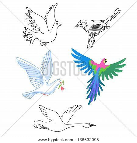Birds set linear silhouette isolated on background vector illustration