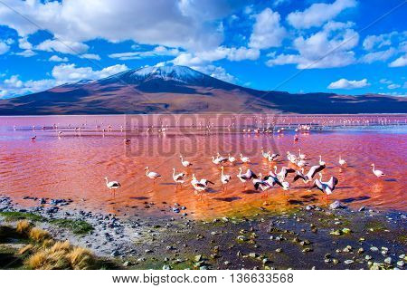 Flamingoes in Laguna Colorada Uyuni in Bolivia