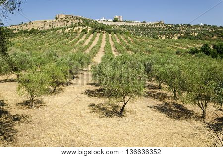 view of evoramonte village from the olive tree field landscape of alentejo