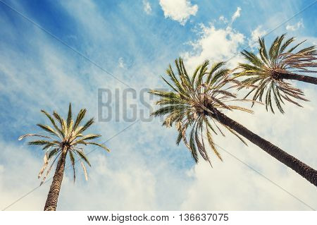 Palms On The Tropical Beach Against The Blue Sky.