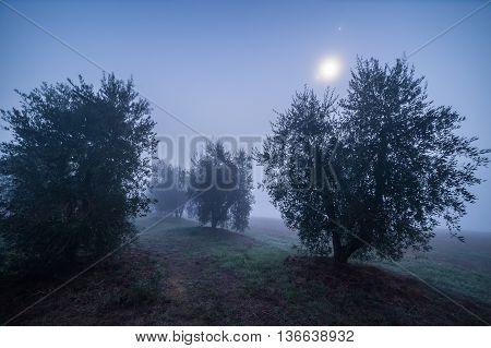 Olive Garden At Night