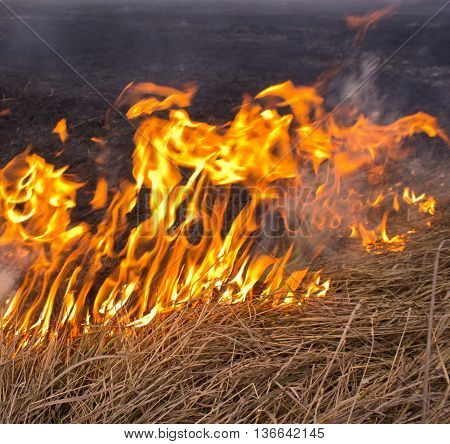fire in the autumn steppe burns dry grass