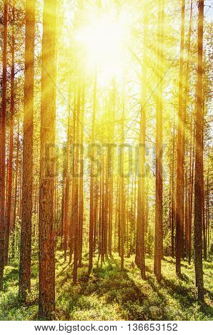 Morning forest bathed in the bright summer sun.