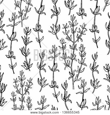 Thyme vector drawing seamless pattern. Isolated thyme plant and leaves. Herbal engraved style illustration. Detailed organic product sketch. Cooking spicy ingredient
