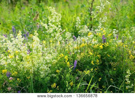 Abundance of blooming wild flowers on the meadow at summer.