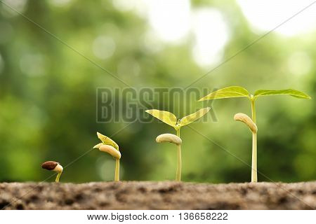 Agriculture. Baby plants seedling in germination sequence on natural green background. Growing baby plants
