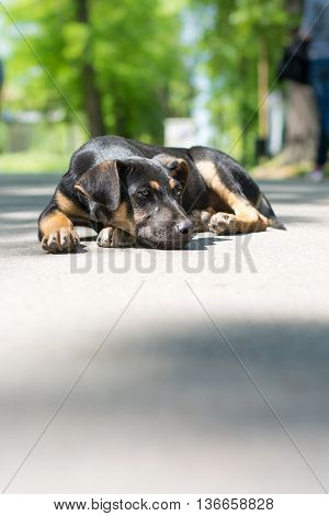 Lonely black stray dog lying in the park