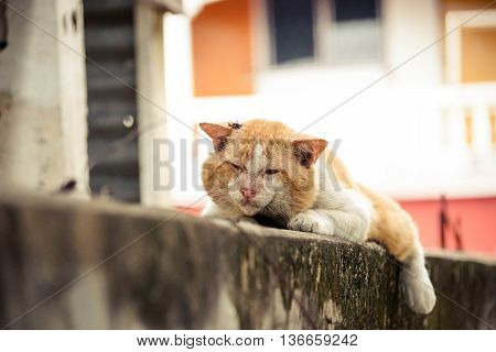 Local Tomcat. Old male cat with a big face on concrete wall