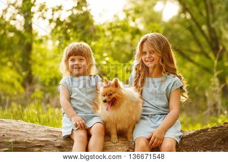 Little girl hugging a pet. Sisters and a dog sitting on a fallen tree. Girls smile. Pedigree dogs Spitz.
