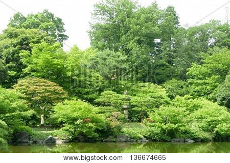 Green Plants, Pond With Reflection In Japanese Zen Garden